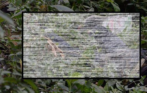 En el sector conocido como 'La Cueva del Humo', fue hallado un cuerpo sin vida en una zona semiboscosa