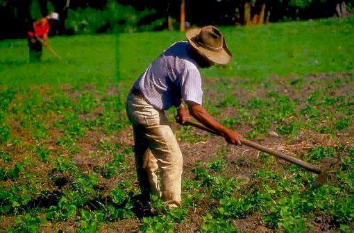 Desde el Senado de la República se anunció auxilios por 1.5 billones para pequeños productores campesinos