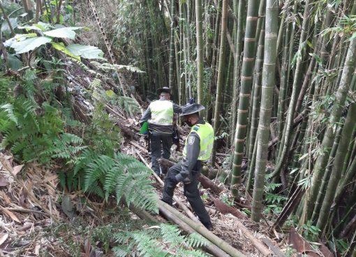 La CRQ y la Policía Ambiental no permitirán que la guadua en el departamento sea utilizada para ocupaciones ilegales al espacio público