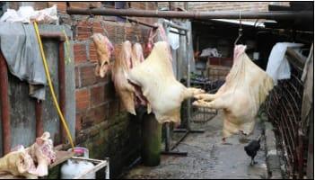 Privados de la libertad cinco presuntos integrantes de grupo delictivo dedicado al sacrificio y beneficio clandestino de cerdos en Risaralda