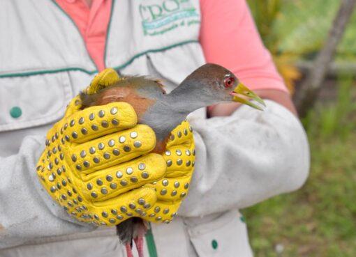 Desde la CRQ se dijo que, en lo que va del año se han decomisado 708 especímenes de fauna silvestre