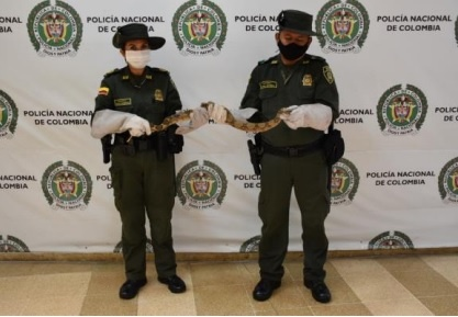 La policía de la Subestación de la Herradura rescató una Boa Constrictor