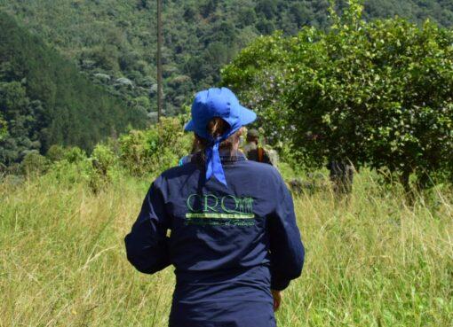 La CRQ abrió dos procesos sancionatorios ambientales por cultivos de caña en humedales del predio Pizamal en La Tebaida