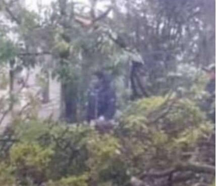 Dos menores de edad, fallecieron al caerles un árbol encima, las víctimas se estaban escampando de la fuerte lluvia