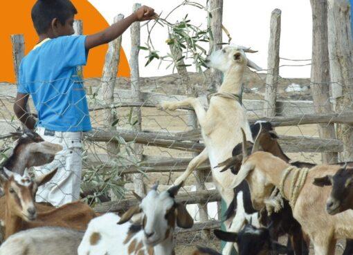 Icbf abre convocatoria para que grupos étnicos aplique en proyectos de fortalecimiento familiar