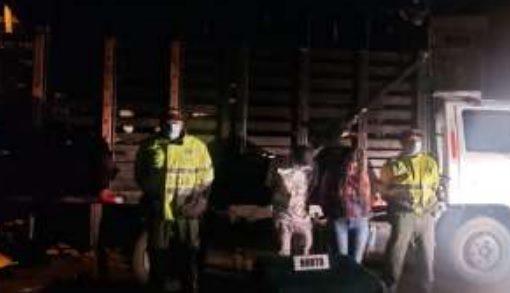 Jóvenes en Calarcá fueron descubiertos con 8 cabezas de ganado hurtadas