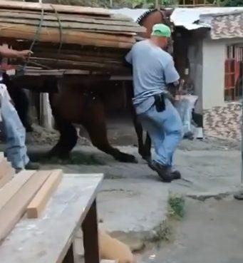 Indignación en Calarcá por video que expone un caso de crueldad animal con un caballo sobrecargado que cae en vía empinada